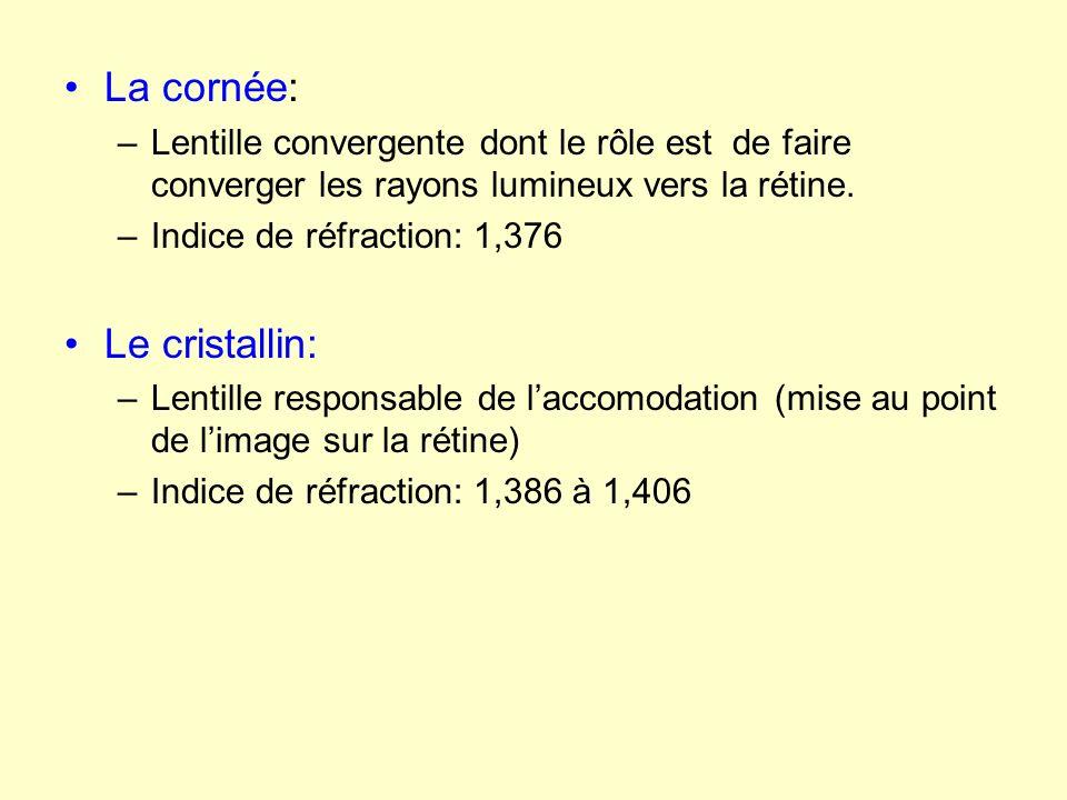 La cornée: –Lentille convergente dont le rôle est de faire converger les rayons lumineux vers la rétine. –Indice de réfraction: 1,376 Le cristallin: –