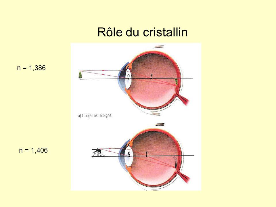 Rôle du cristallin n = 1,386 n = 1,406