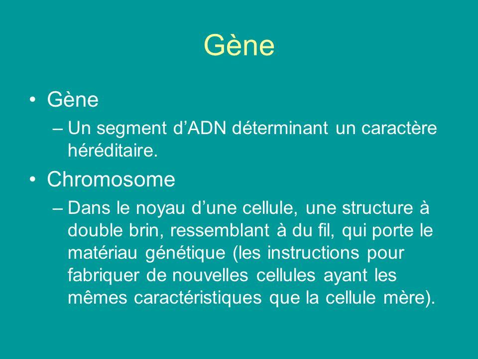 Gène –Un segment dADN déterminant un caractère héréditaire. Chromosome –Dans le noyau dune cellule, une structure à double brin, ressemblant à du fil,