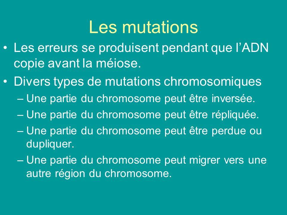 Les mutations Les erreurs se produisent pendant que lADN copie avant la méiose. Divers types de mutations chromosomiques –Une partie du chromosome peu