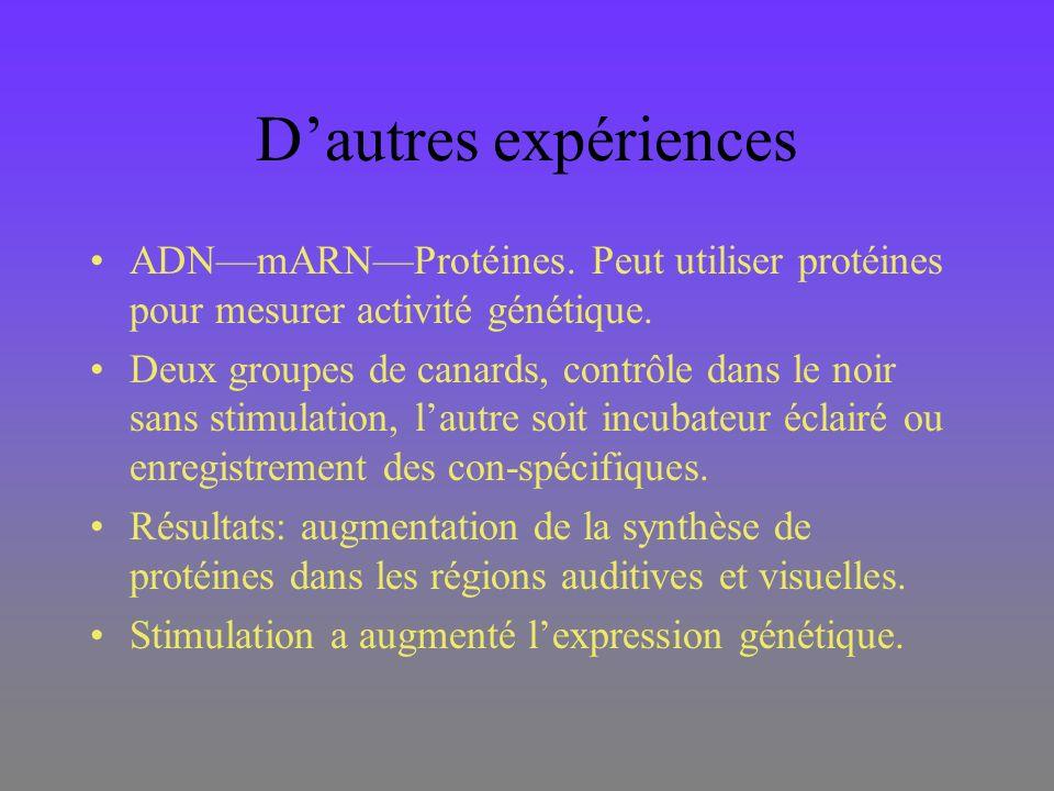 Dautres expériences ADNmARNProtéines. Peut utiliser protéines pour mesurer activité génétique. Deux groupes de canards, contrôle dans le noir sans sti