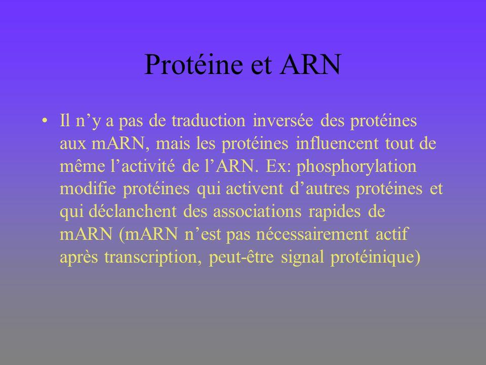 Protéine et ARN Il ny a pas de traduction inversée des protéines aux mARN, mais les protéines influencent tout de même lactivité de lARN. Ex: phosphor
