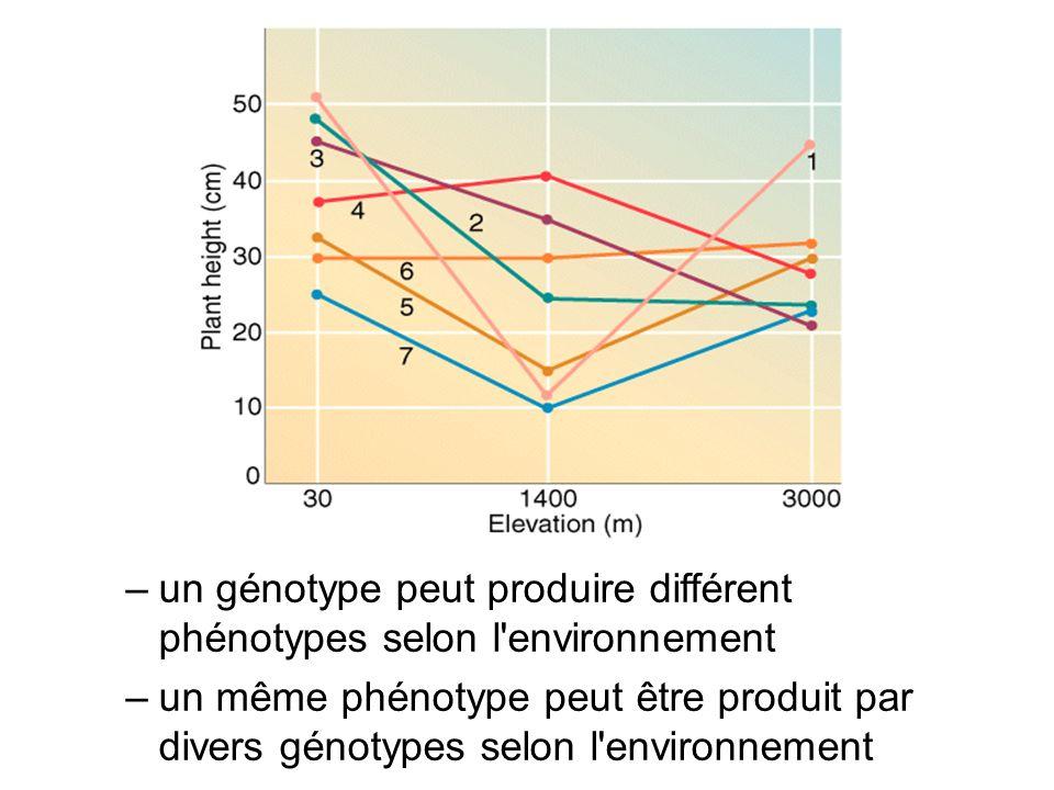 –un génotype peut produire différent phénotypes selon l'environnement –un même phénotype peut être produit par divers génotypes selon l'environnement