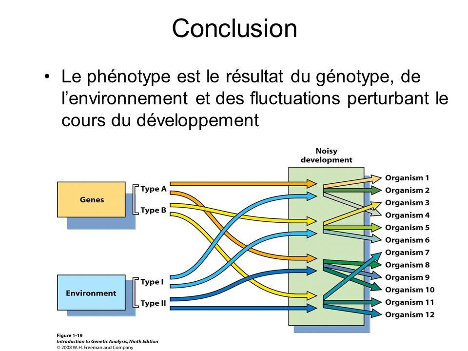 Conclusion Le phénotype est le résultat du génotype, de lenvironnement et des fluctuations perturbant le cours du développement