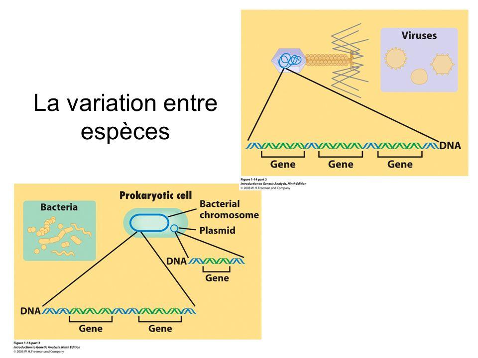 La norme de réaction Décrit les relations environnement- phénotype pour un génotype déterminé l ensemble des phénotypes produits par un génotype particulier sous différentes conditions environnementales –un génotype peut produire différent phénotypes selon l environnement –un même phénotype peut être produit par divers génotypes selon l environnement