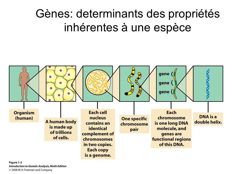 Gènes: determinants des propriétés inhérentes à une espèce