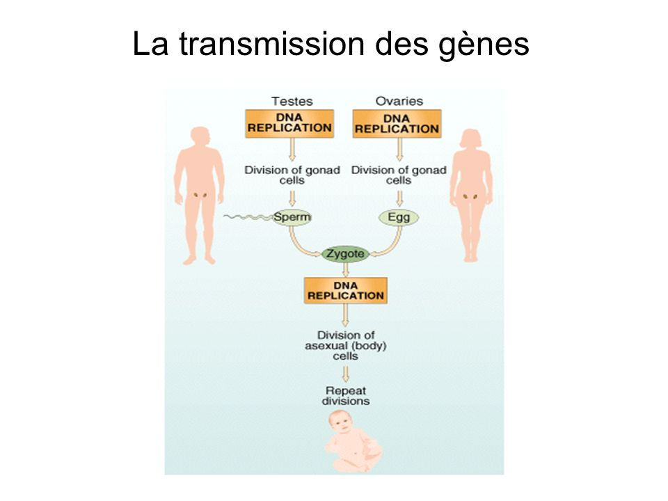 –un génotype peut produire différent phénotypes selon l environnement –un même phénotype peut être produit par divers génotypes selon l environnement