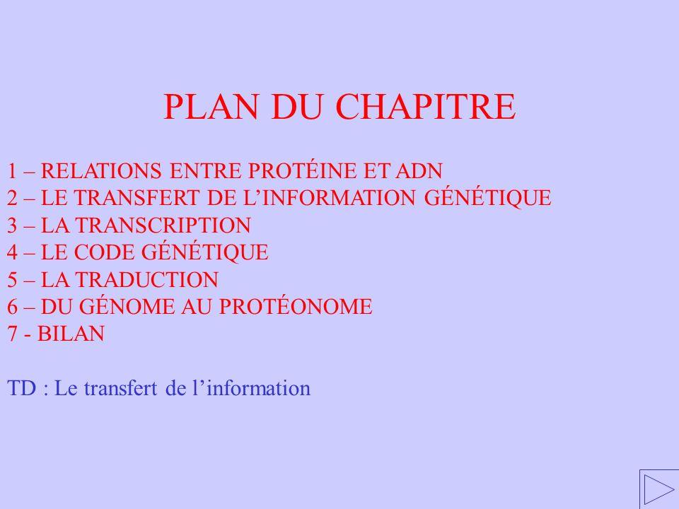 LARN polymérase se fixe sur lADN lorsque le promoteur est démasqué La transcription : 2) Les mécanismes