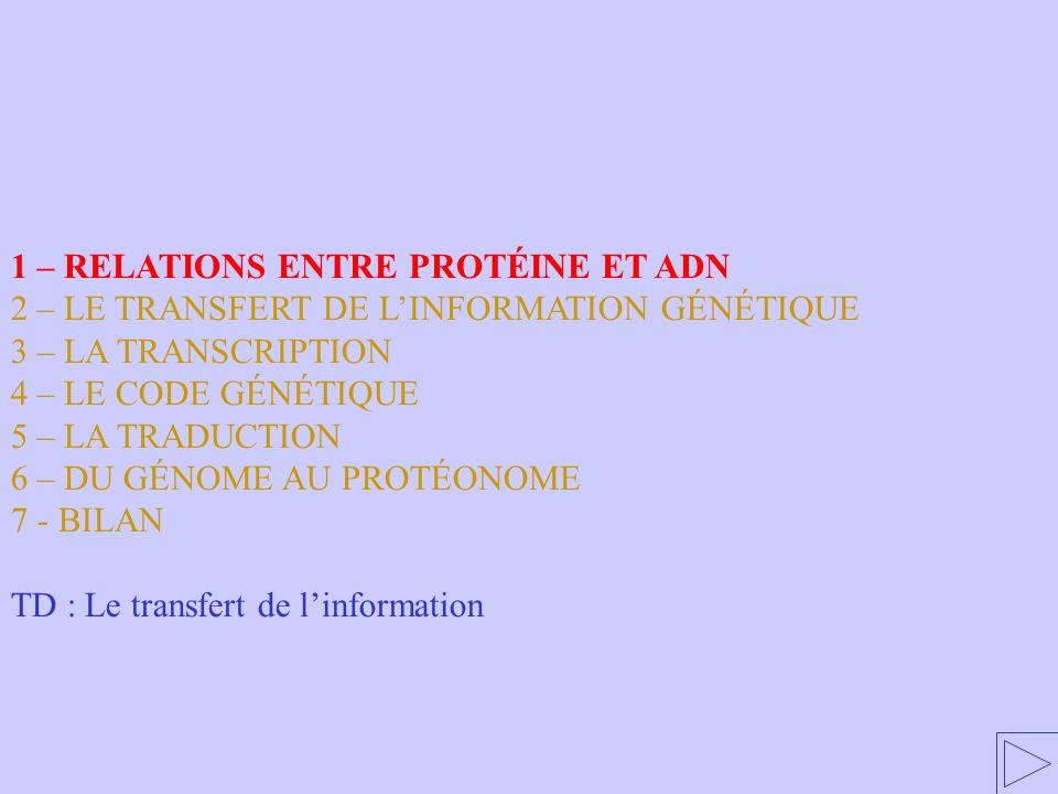 RENDEZ-VOUS… Code : A=1 B=2 C=3 … Message codé Message traduit AUGCACUGU… méthionine-histidine-cystéine… Code Génétique en acides aminés en acides nucléiques Le code génétique