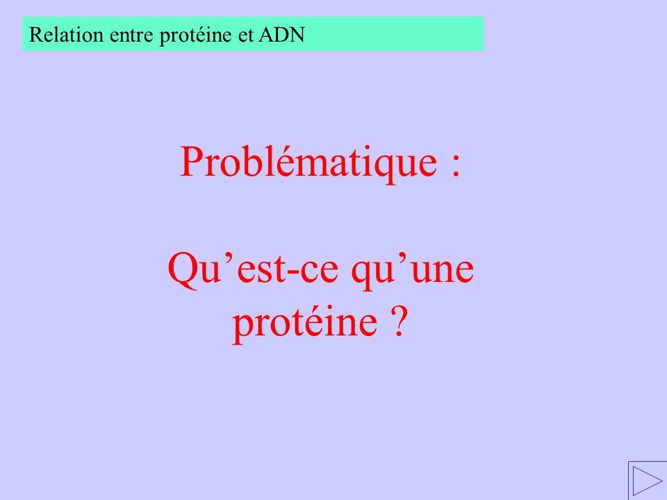 Relation entre protéine et ADN Protéines de structure et protéines de fonction Livre p. 53