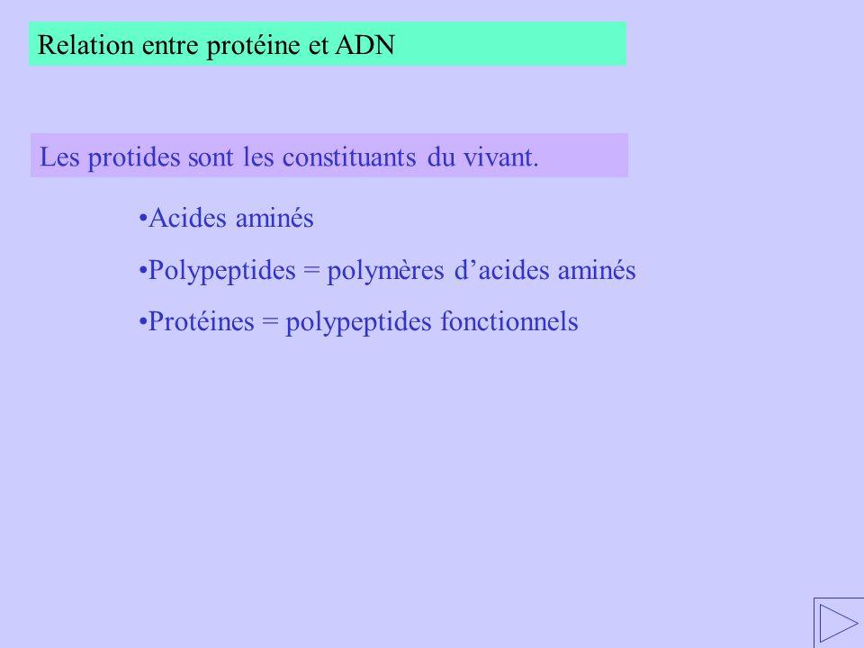 - sont des chaînes dacides nucléiques - se distinguent de lADN par leurs singularités Les molécules dARN La transcription : 1) Les ARN