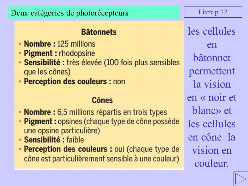 Deux catégories de photorécepteurs. les cellules en bâtonnet permettent la vision en « noir et blanc» et les cellules en cône la vision en couleur. Li