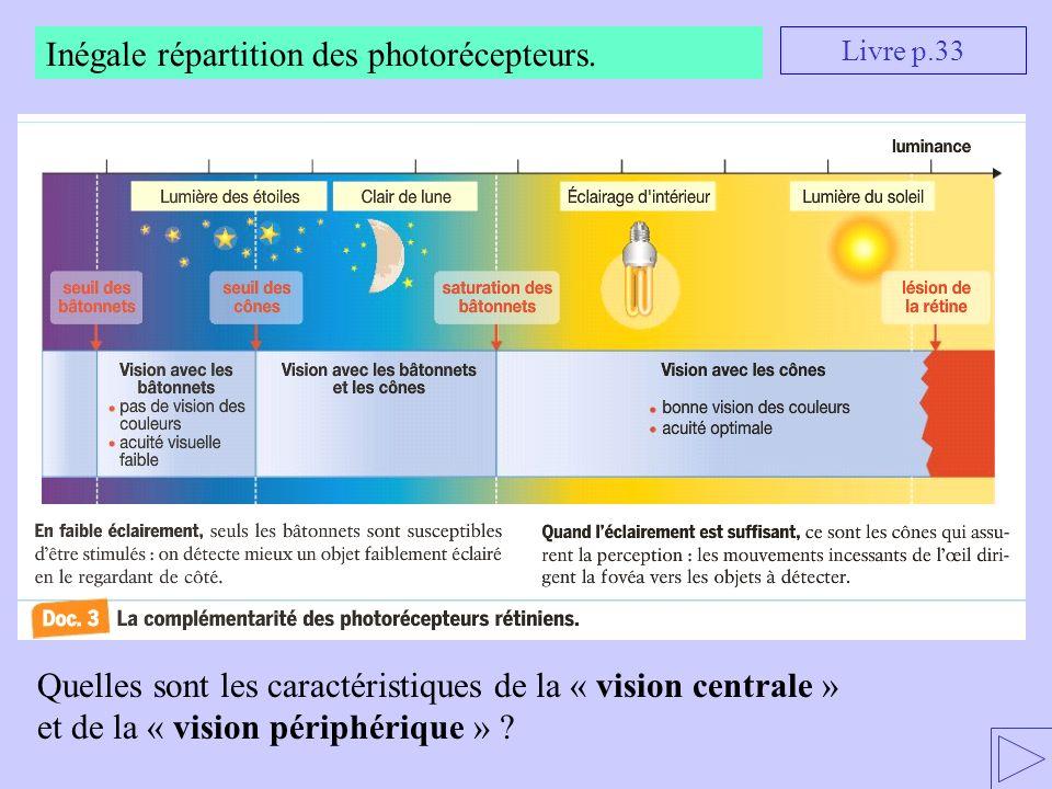Inégale répartition des photorécepteurs. Quelles sont les caractéristiques de la « vision centrale » et de la « vision périphérique » ? Livre p.33