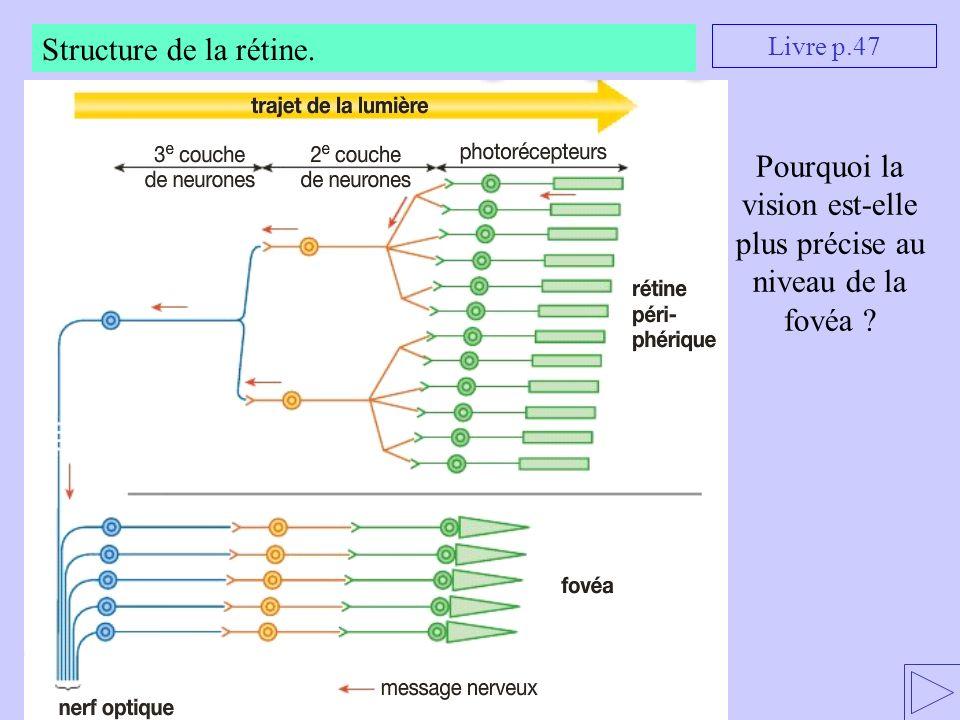 Structure de la rétine. Pourquoi la vision est-elle plus précise au niveau de la fovéa ? Livre p.47