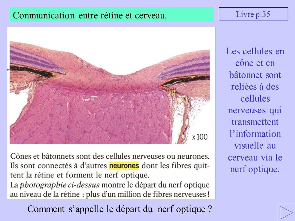Livre p.35 Comment sappelle le départ du nerf optique ? Les cellules en cône et en bâtonnet sont reliées à des cellules nerveuses qui transmettent lin