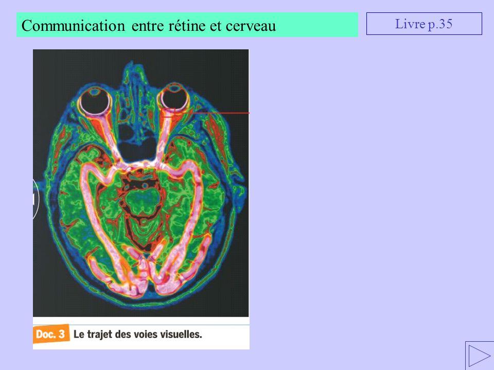 Communication entre rétine et cerveau Livre p.35