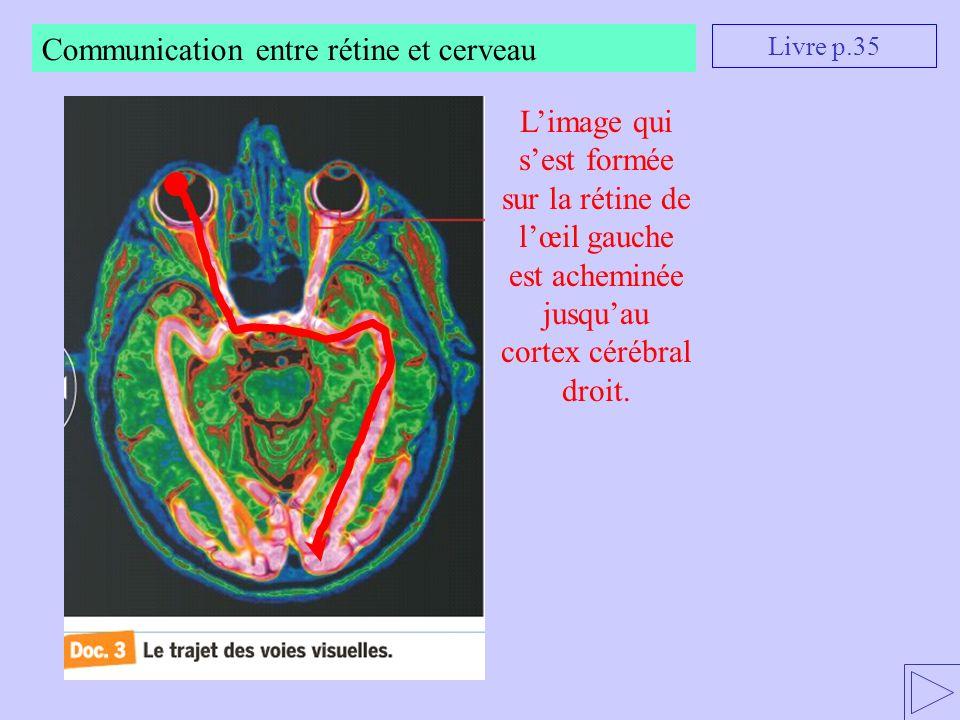 Communication entre rétine et cerveau Livre p.35 Limage qui sest formée sur la rétine de lœil gauche est acheminée jusquau cortex cérébral droit.