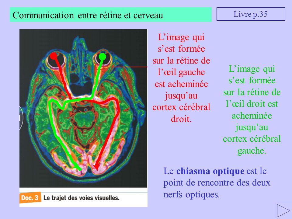 Communication entre rétine et cerveau Limage qui sest formée sur la rétine de lœil droit est acheminée jusquau cortex cérébral gauche. Livre p.35 Lima