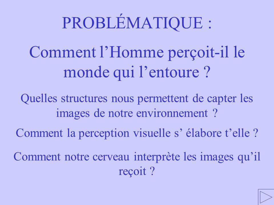 4.1 Coopération entre différentes aires cérébrales 1 – LA RÉTINE, UNE MOSAÏQUE DE PHOTORÉCEPTEURS 1.1.