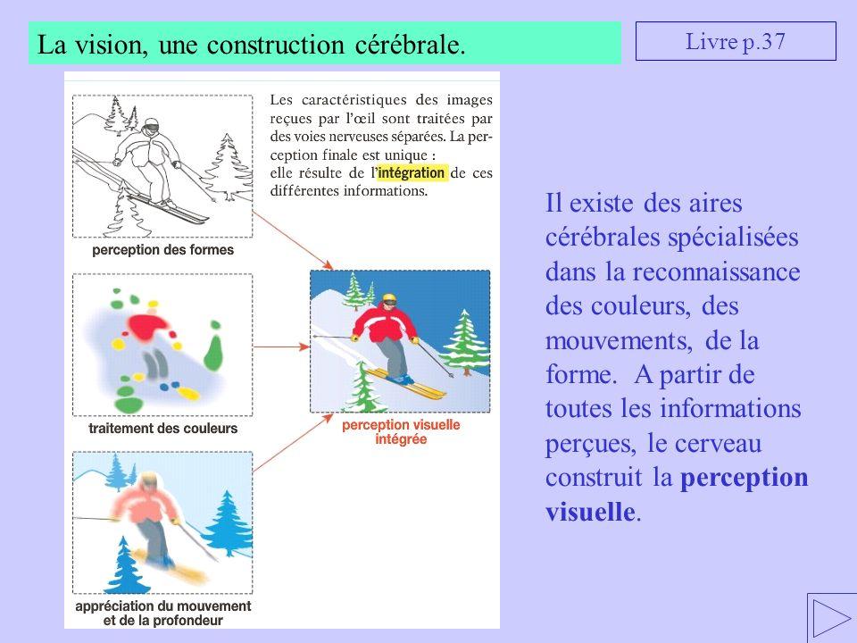 La vision, une construction cérébrale. Il existe des aires cérébrales spécialisées dans la reconnaissance des couleurs, des mouvements, de la forme. A
