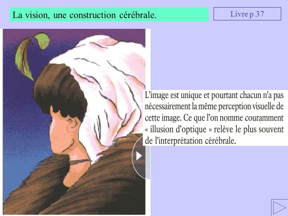 La vision, une construction cérébrale. Livre p.37
