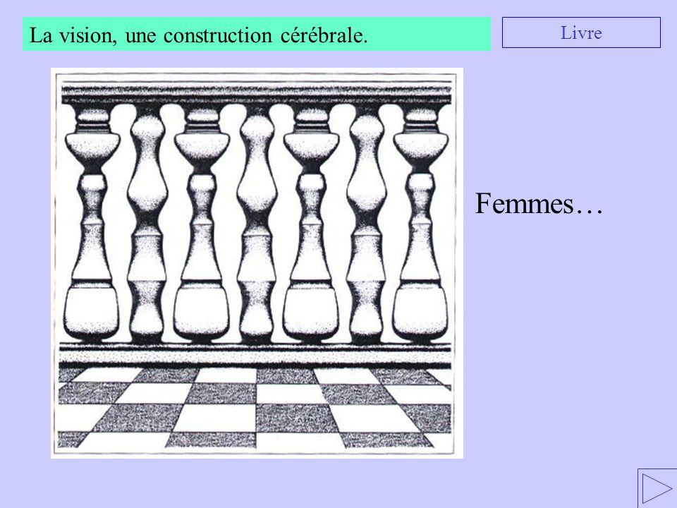 La vision, une construction cérébrale. Livre Femmes…