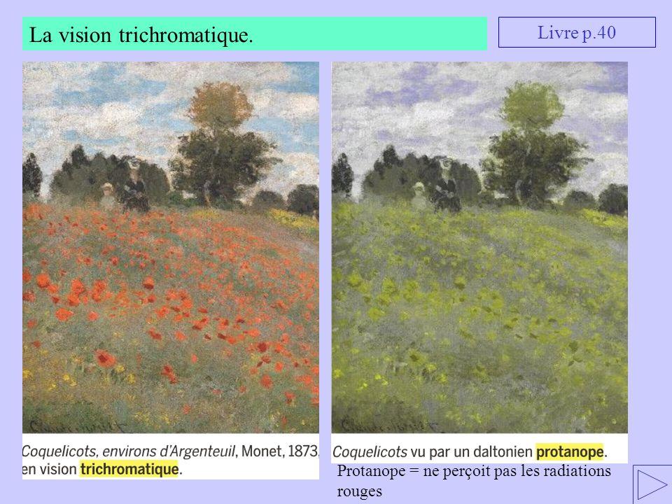 La vision trichromatique. Livre p.40 Protanope = ne perçoit pas les radiations rouges