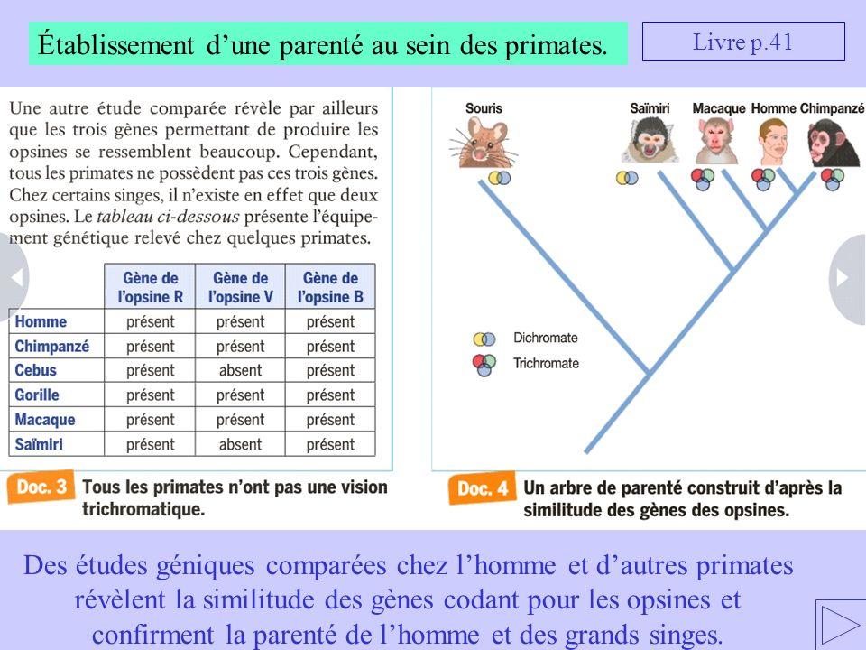 Établissement dune parenté au sein des primates. Livre p.41 Des études géniques comparées chez lhomme et dautres primates révèlent la similitude des g