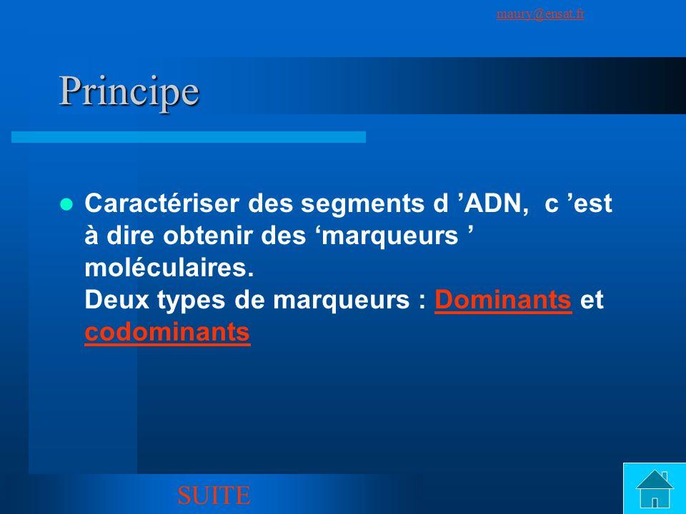 SuivantPrécédent maury@ensat.fr 4 Principe Caractériser des segments d ADN, c est à dire obtenir des marqueurs moléculaires. Deux types de marqueurs :