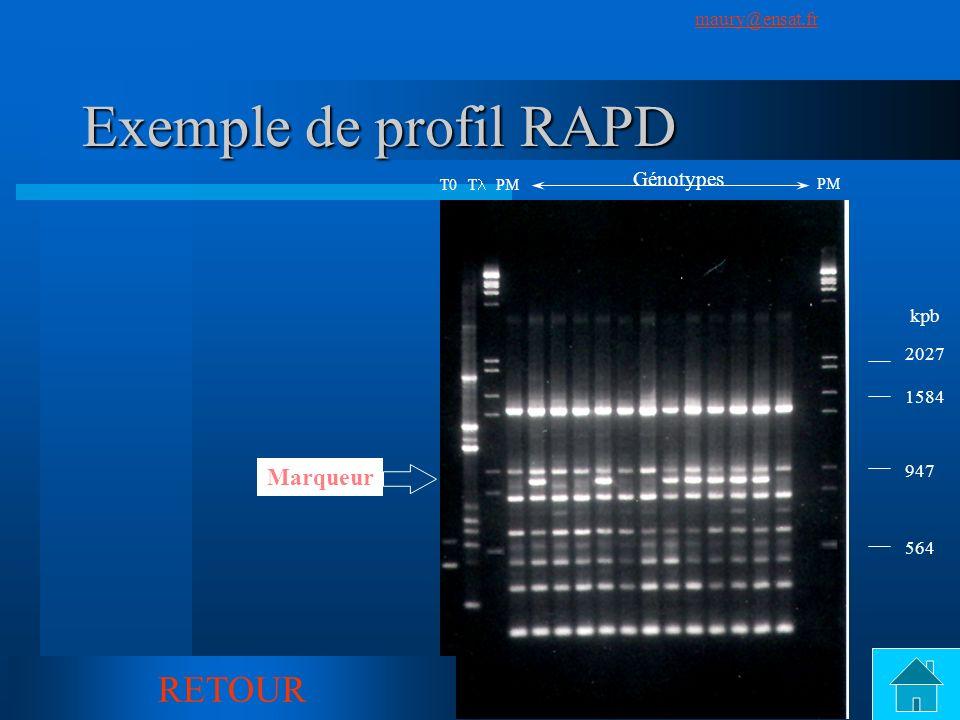 SuivantPrécédent maury@ensat.fr 7 Exemple de profil RAPD T0 T PM PM Génotypes Marqueur 2027 1584 947 564 kpb RETOUR