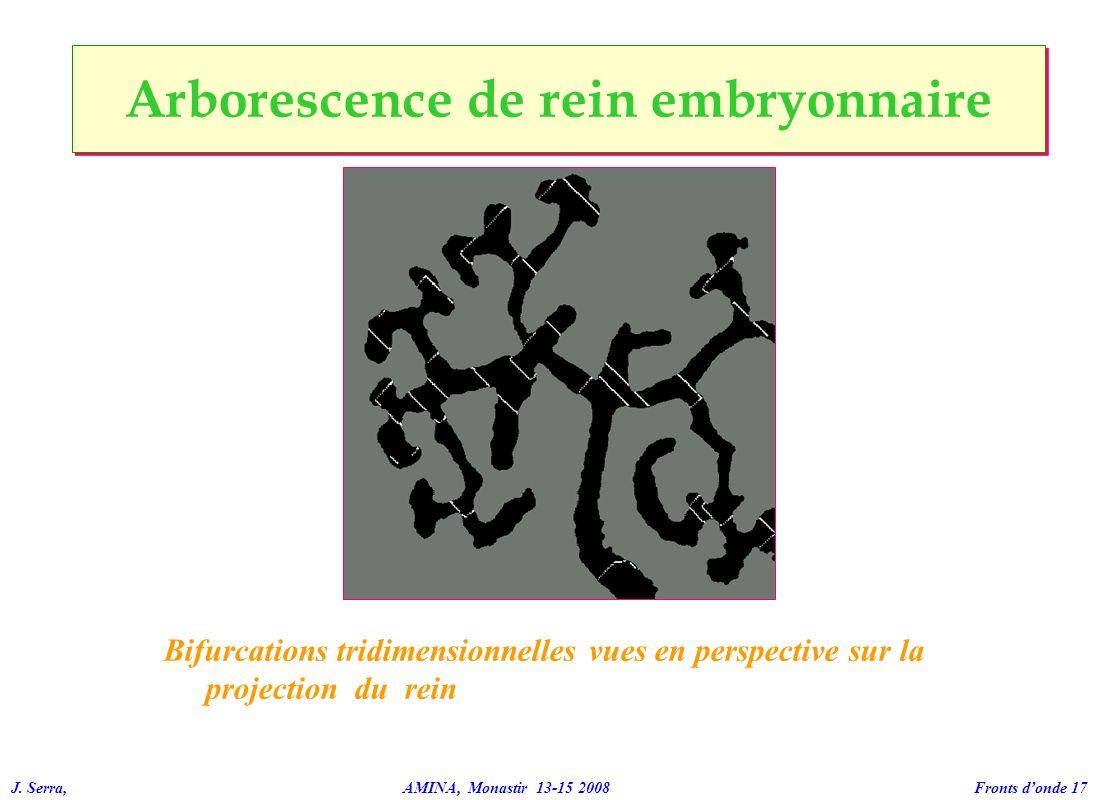 J. Serra, AMINA, Monastir 13-15 2008 Fronts donde 17 Bifurcations tridimensionnelles vues en perspective sur la projection du rein Arborescence de rei