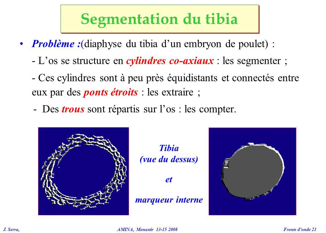 J. Serra, AMINA, Monastir 13-15 2008 Fronts donde 21 Problème :(diaphyse du tibia dun embryon de poulet) : - Los se structure en cylindres co-axiaux :