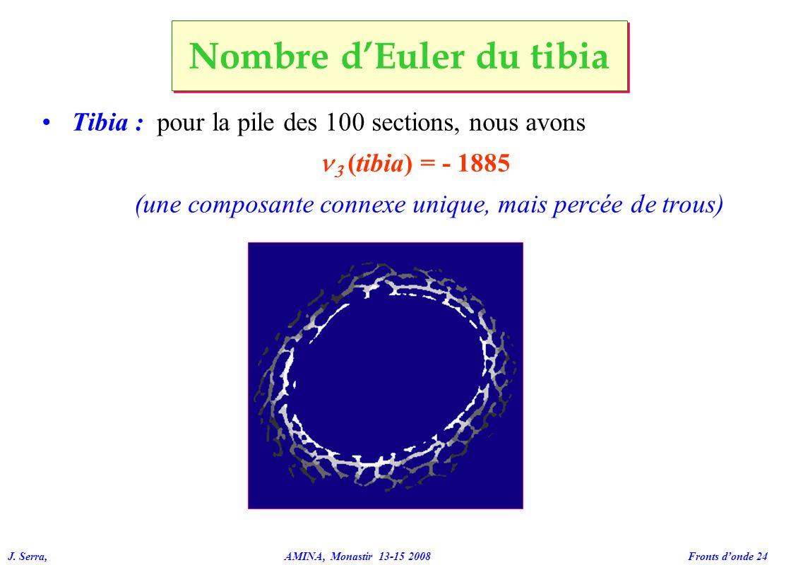 J. Serra, AMINA, Monastir 13-15 2008 Fronts donde 24 Tibia : pour la pile des 100 sections, nous avons (tibia) = - 1885 (une composante connexe unique