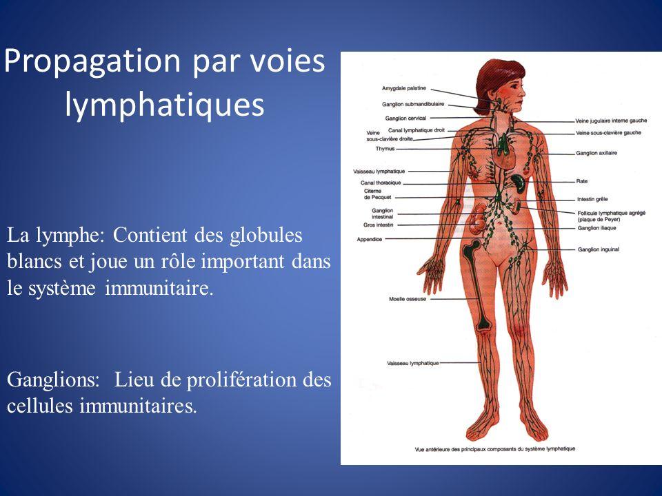 Propagation par voies lymphatiques Ganglions: Lieu de prolifération des cellules immunitaires. La lymphe: Contient des globules blancs et joue un rôle