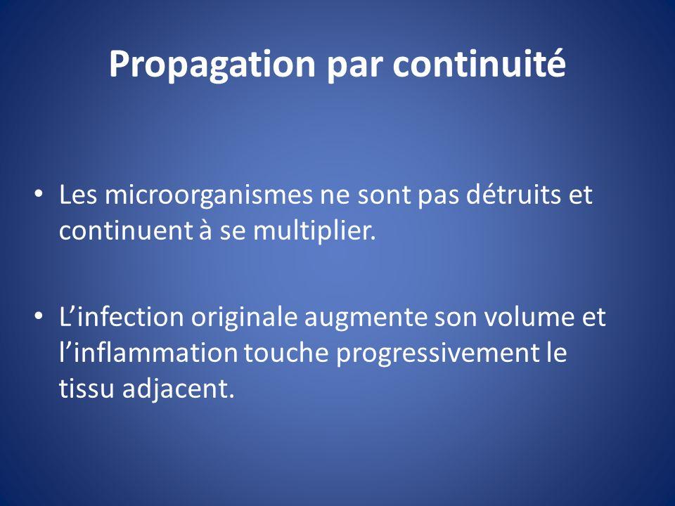 Propagation par continuité Linfection se propage, elle sétend aux tissus voisins Ce sont les streptoccoques qui causent se genre dinfection.