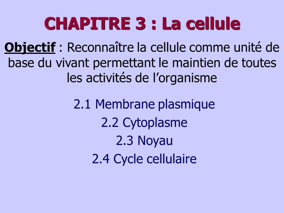 CHAPITRE 3 : La cellule 2.1 Membrane plasmique 2.2 Cytoplasme 2.3 Noyau 2.4 Cycle cellulaire Objectif : Reconnaître la cellule comme unité de base du vivant permettant le maintien de toutes les activités de lorganisme