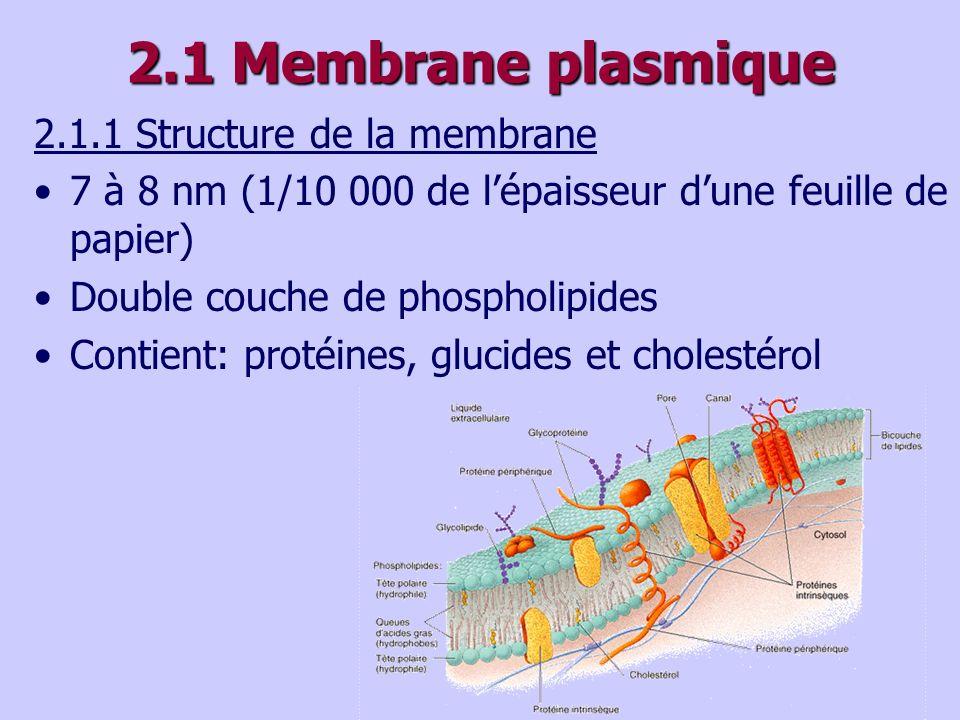 2.1 Membrane plasmique 2.1.1 Structure de la membrane 7 à 8 nm (1/10 000 de lépaisseur dune feuille de papier) Double couche de phospholipides Contient: protéines, glucides et cholestérol