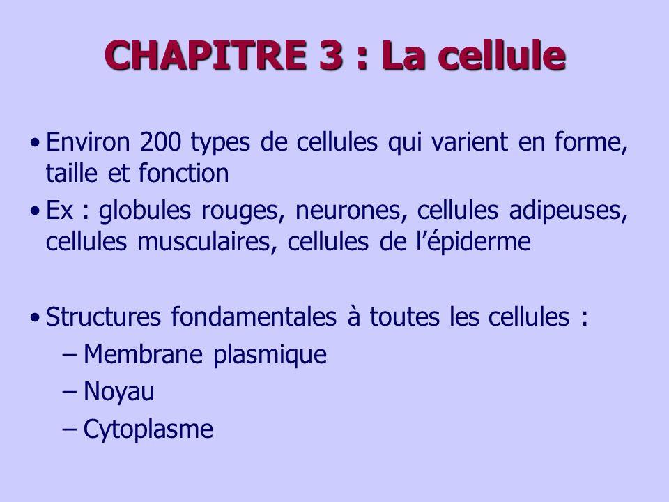 CHAPITRE 3 : La cellule Environ 200 types de cellules qui varient en forme, taille et fonction Ex : globules rouges, neurones, cellules adipeuses, cellules musculaires, cellules de lépiderme Structures fondamentales à toutes les cellules : –Membrane plasmique –Noyau –Cytoplasme