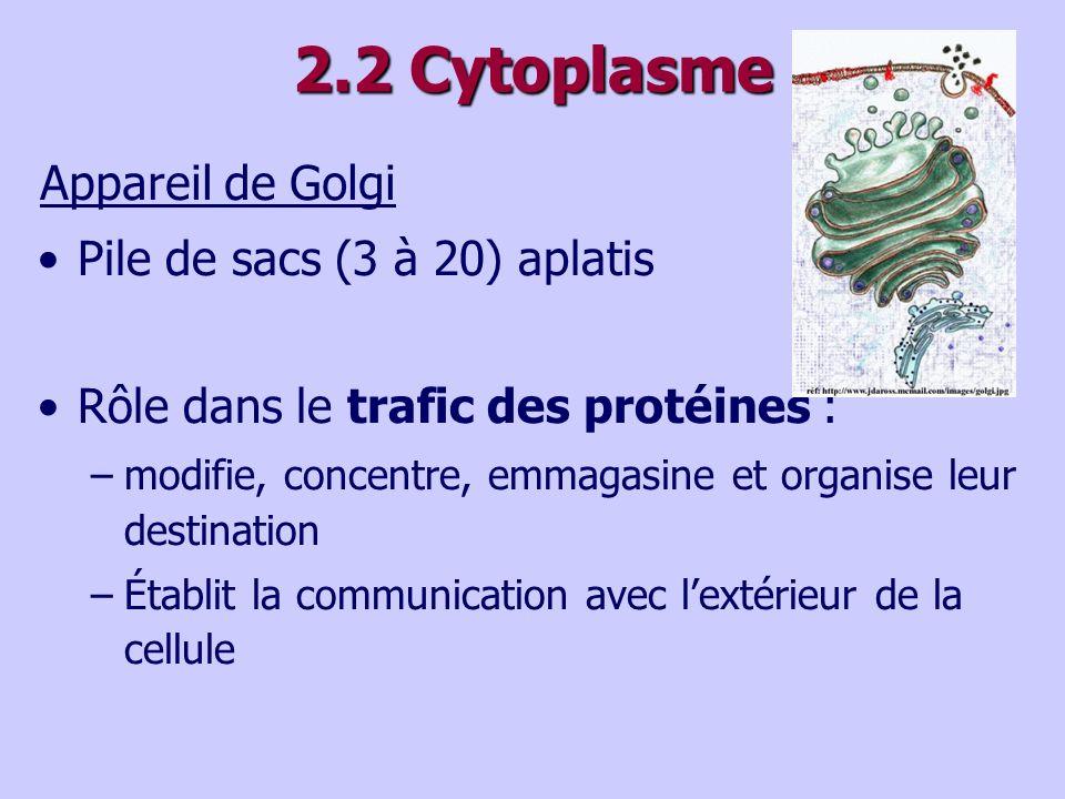 2.2 Cytoplasme Appareil de Golgi Pile de sacs (3 à 20) aplatis Rôle dans le trafic des protéines : –modifie, concentre, emmagasine et organise leur destination –Établit la communication avec lextérieur de la cellule