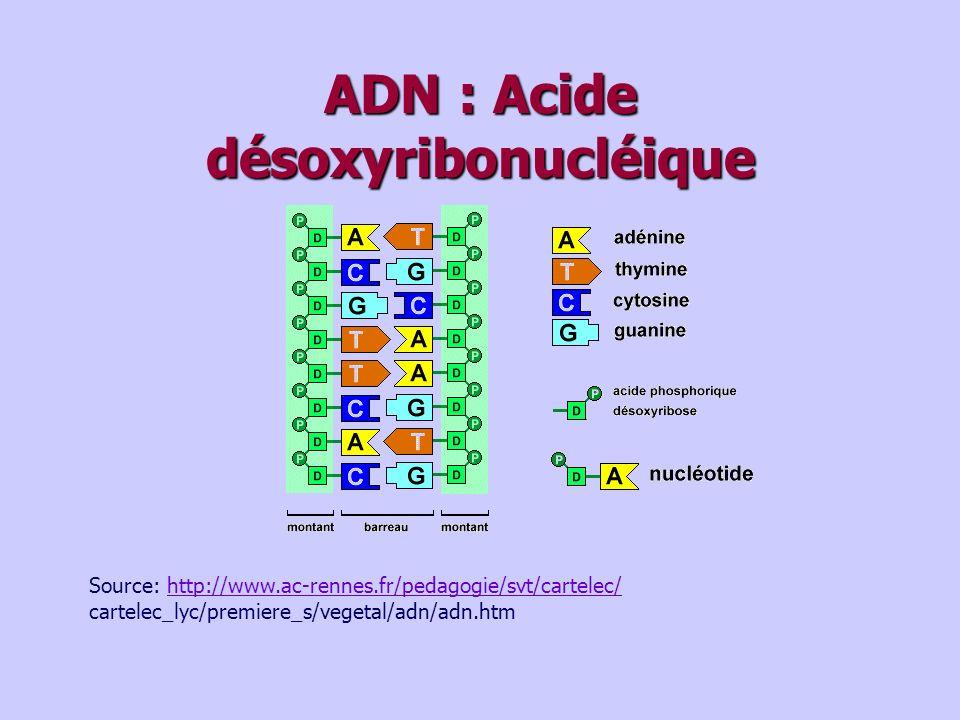 ADN : Acide désoxyribonucléique Source: http://www.ac-rennes.fr/pedagogie/svt/cartelec/http://www.ac-rennes.fr/pedagogie/svt/cartelec/ cartelec_lyc/premiere_s/vegetal/adn/adn.htm