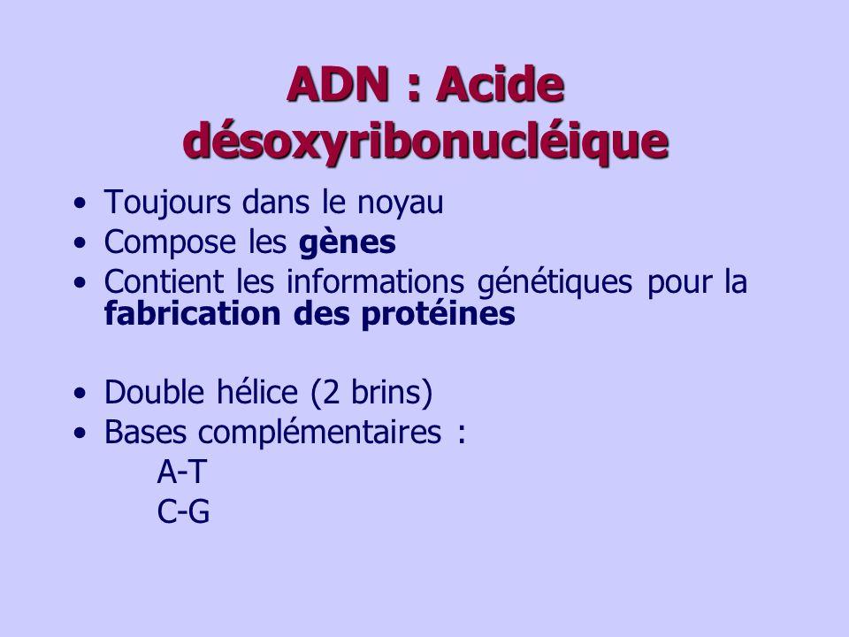 ADN : Acide désoxyribonucléique Toujours dans le noyau Compose les gènes Contient les informations génétiques pour la fabrication des protéines Double hélice (2 brins) Bases complémentaires : A-T C-G