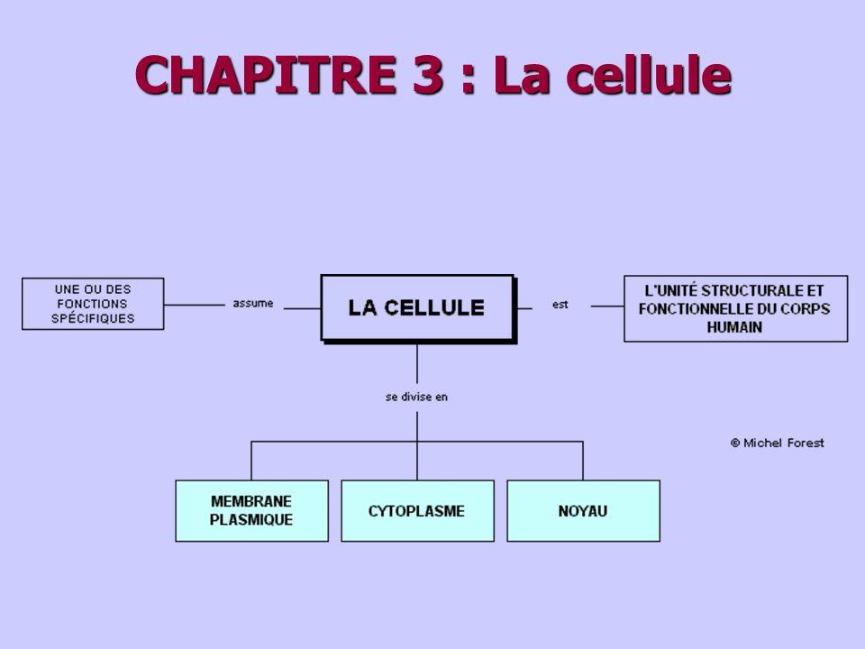 CHAPITRE 3 : La cellule