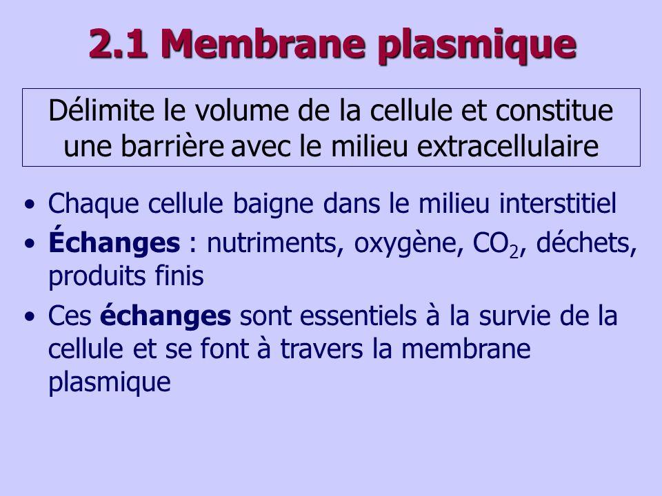 2.1 Membrane plasmique Délimite le volume de la cellule et constitue une barrière avec le milieu extracellulaire Chaque cellule baigne dans le milieu interstitiel Échanges : nutriments, oxygène, CO 2, déchets, produits finis Ces échanges sont essentiels à la survie de la cellule et se font à travers la membrane plasmique