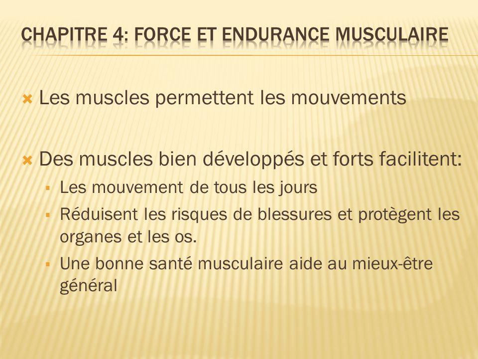 Les muscles permettent les mouvements Des muscles bien développés et forts facilitent: Les mouvement de tous les jours Réduisent les risques de blessu
