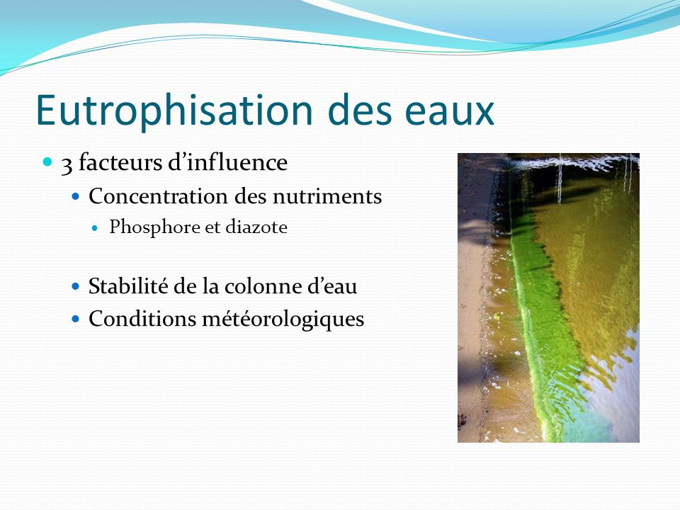Conséquences Formation de fleurs deau bactériennes Changement des propriété de leau Environ 40 espèces produisent des toxines Danger pour lenvironnement aquatique et les mammifères.