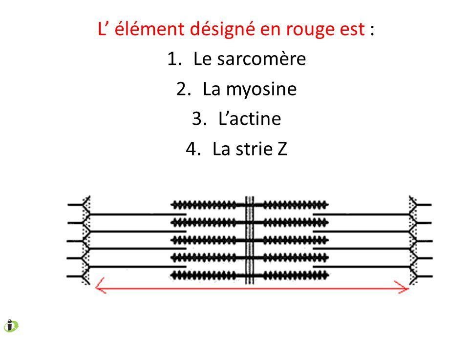 L élément désigné en rouge est : 1.Le sarcomère 2.La myosine 3.Lactine 4.La strie Z