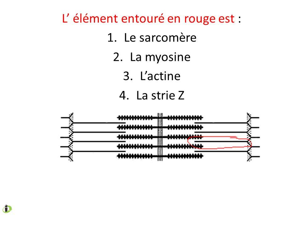 L élément entouré en rouge est : 1.Le sarcomère 2.La myosine 3.Lactine 4.La strie Z