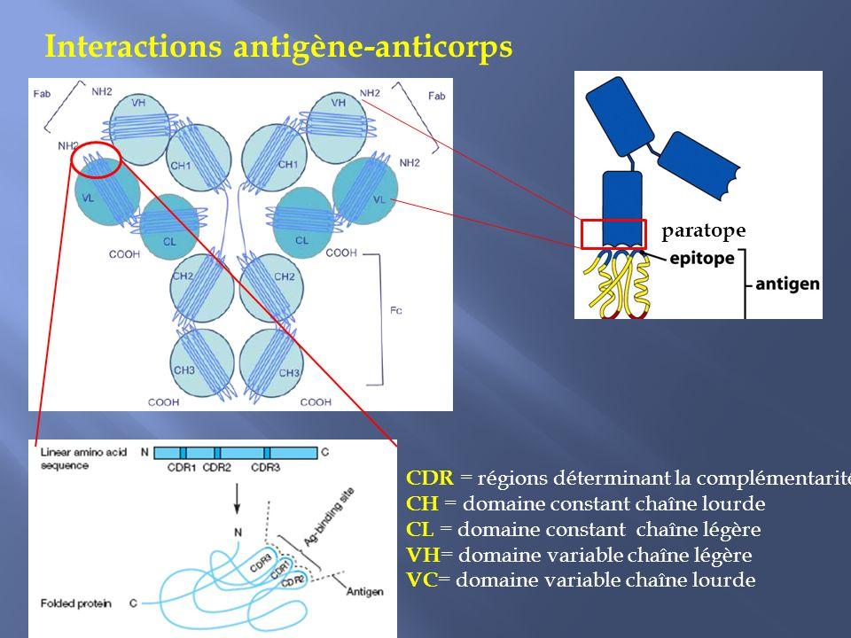 Interactions antigène-anticorps CDR = régions déterminant la complémentarité CH = domaine constant chaîne lourde CL = domaine constant chaîne légère VH = domaine variable chaîne légère VC = domaine variable chaîne lourde paratope