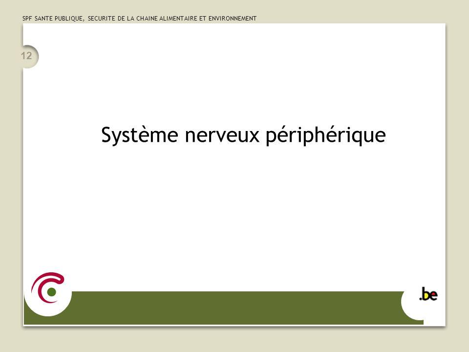 SPF SANTE PUBLIQUE, SECURITE DE LA CHAINE ALIMENTAIRE ET ENVIRONNEMENT 12 Système nerveux périphérique