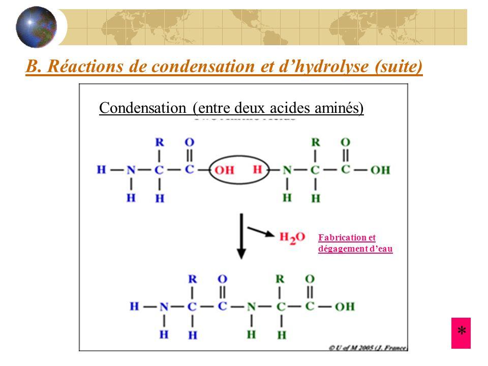 B. Réactions de condensation et dhydrolyse (suite) Condensation (entre deux acides aminés) Fabrication et dégagement deau *
